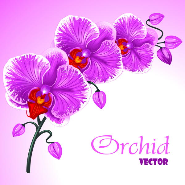 Excellent background with realistic vector illustration of orchid free vector downloads