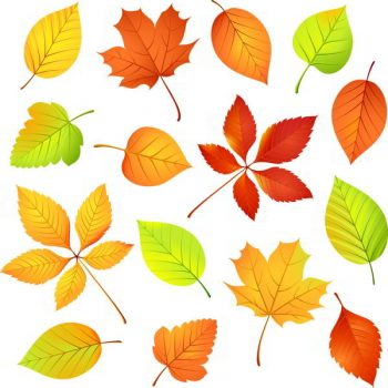 Colored leaf vector set Free Vectors - 1706201606