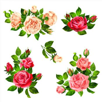 Roses branches on white vector design set