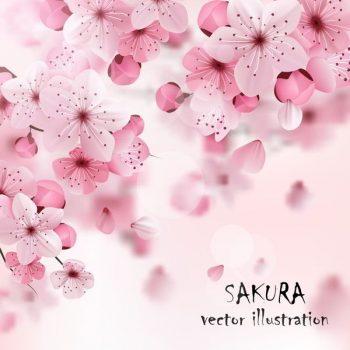 Pink Cherry Sakura