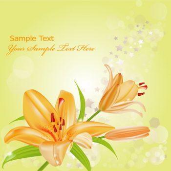 Orange lilies vector