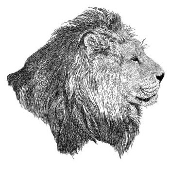 Lion head stroke