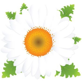 Beautiful Spring Flower vector free - 2407201603