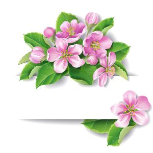 Apple tree blossom vector with space for text - 2008201602