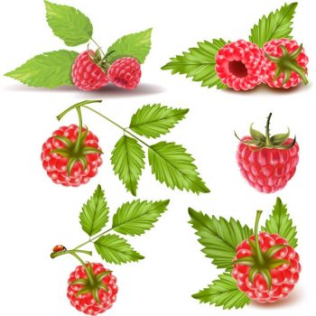 Raspberries vector set free download - 3008201602