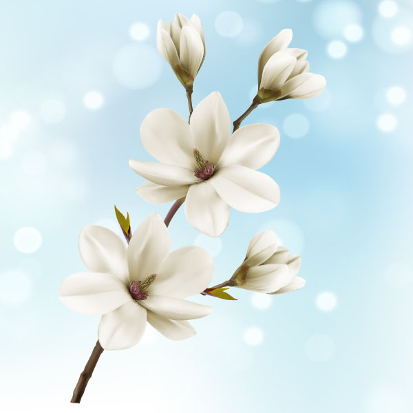 White magnolia flower vector 2306201701 white magnolia flower vector 2306201701 mightylinksfo